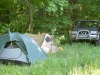 Our camping site in the territory of Tolstolesivske Forestry