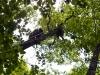Ascending to the Buzzard's nest
