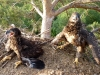 Chicks of the White-tailed Eagle in a threatening pose