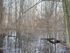 Spring flood penetrated in forest