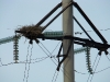 A nest of the Long-legged Buzzard on the power line pole