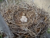 2 chicks hatched from two eggs