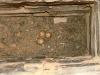 The third nest of the Lesser Kestrel