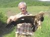 Adult Lesser Spotted Eagle