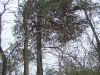 Nesting tree with the protection against martens