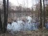 Spring flood in the south part of the Bondarevskoye Swamp