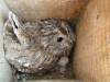 In 2005 females sat in nests so tightly that could be captured by bare hands