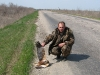 The Marsh Harrier collided with a car