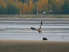 Flying off. Photo by A.Arapov