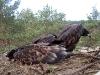 A good result – 3 chicks! (vicinity of Sagunovka Village in Cherkasy region, May 2010).