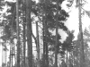 A nest in a forest spot among the clearing (Cherninske Forestry, Kyiv region, May 1997).