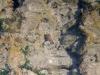 Saker on the nesting rock