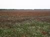 Poppy fields of the Crimea