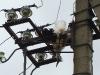 The juvenile White Stork died on the power line pylon