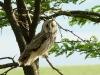 Owl is disturbed