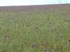 Flowering steppe