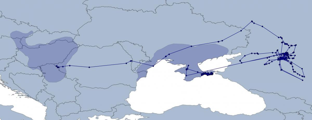 Схема миграционных перемещений