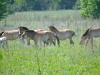 A foal appeared in the herd of horses