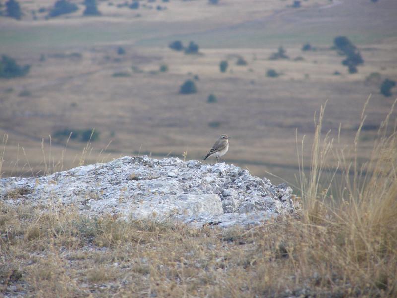 птицы в горах крыма верстовой столб
