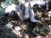 В гнезде гибридный птенец и болтун