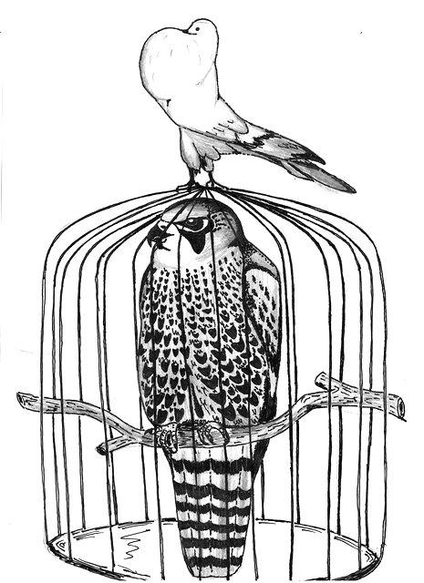 Картинки ловушки для птиц
