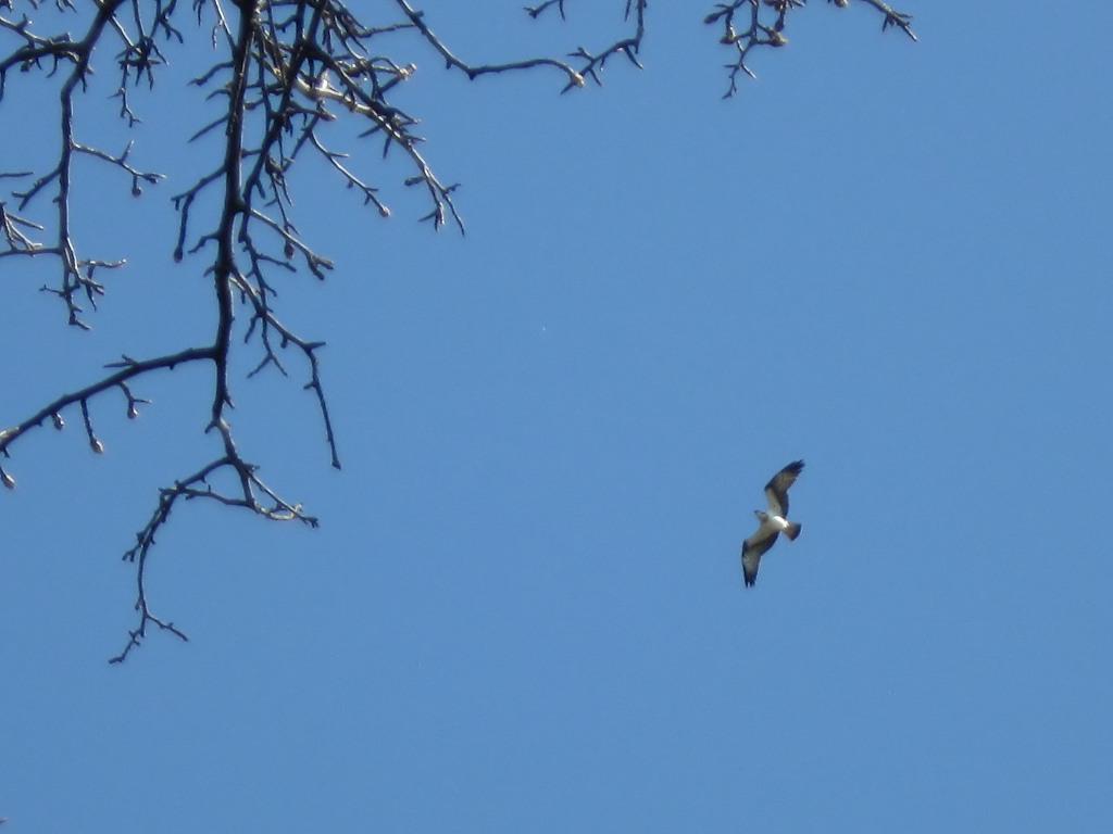 Хищные птицы донецкой области