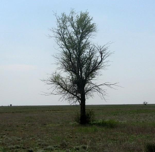 деревья в степи фото и названия простое изобретение, которое