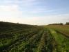 Одна із загроз для балабанів - розорювання степових ділянок з метою засадження лісом. Такий випадок (на фото) зафіксовано біля гнізда в Миколаївській області