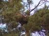 24.08.09 : гнездо опустело. Фото Письменного К.А.