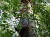 Михаил Франчук взбирается на гнездо большого подорлика