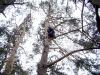 Выбор места в кроне дерева для установки гнездовья