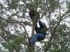 Крепление корзины в развилке дерева