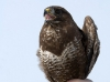Так можно обездвижить птицу одной рукой, не причиняя ей вреда