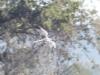 Самец степного луня на миграции, фото 4