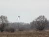 Вернувшиеся с зимовки птицы безусловно красят не очень-то радостный апрельский пейзаж
