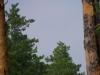 Взрослый змееяд с отловленной змеей осматривается вокруг в поисках слетка. Найти его - непростая задача, учитывая то, что слеток еще плохо летает и может сидеть где угодно. Фото А.Скитер, 09.08.14
