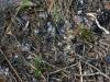 Остатки погадок змееяда, состоящих из чешуи пресмыкающихся, найдены под одной из присад. Фото К.Письменный, 09.09.14