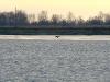 Орлан идет на посадку