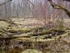 Леса принимают естественный вид