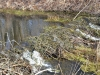 Плотина бобров на канале