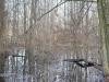 Весенний паводок зацепил лес