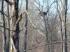 Известное нам гнездо орлана у с. Оташев