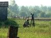 Съемка лошадей Пржевальского