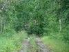 Упавшее на дорогу дерево помешало посетить желаемые территории