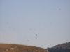 Тысячи мигрирующих птиц над яйлой (городские ласточки)