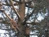 Ушастые совы на месте массового отдыха