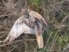 Балабан Макс, застрелений браконьєрами. 12.12.2017. Фото М. Яковлев