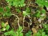 Хребты рептилий, найденные под гнездом обыкновенного канюка