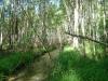 Через лес к болоту
