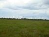 На болоте высота сосен в основном до 3-4 метров